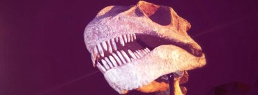 Fotografia na profil na Facebook - dinozaur