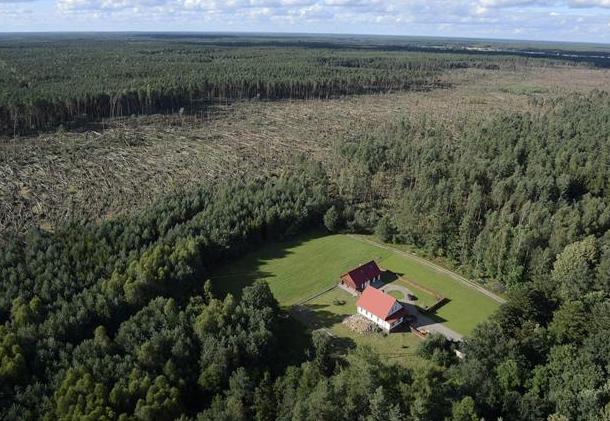 Ilustracja Trąba powietrzna w Polsce – jak powstaje i czy jest groźna? - Polishwords News