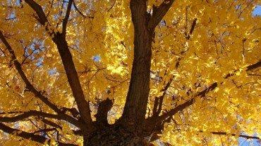 Zmiana czasu 2012 + 9 rad na jesienną chandrę